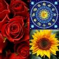 Квіти для знаків зодіаку
