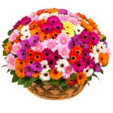 "Basket ""151 Color Gerbera"""