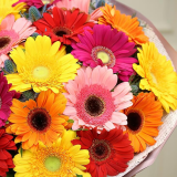 15 Colored gerbera