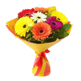 7 Colored gerbera