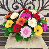 "Basket ""35 colored gerberas"""