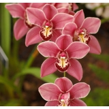 The care of Orchid