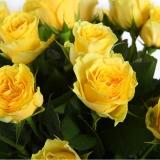 25 Yellow roses