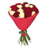 21 Красно-белая роза