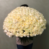 201 Біла троянда