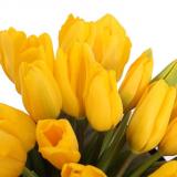 51 yellow tulip in a box