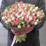 101 Біло-рожевий тюльпан