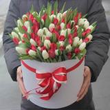 101 Красно-білий тюльпан у коробці