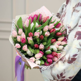 51 Colored Tulip