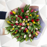 75 Різнобарвни[ тюльпанів