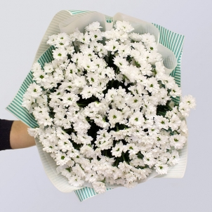15 White chrysanthemums