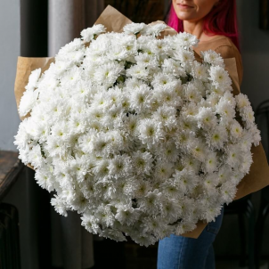 51 White chrysanthemum