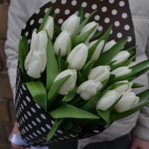 19 Білих тюльпанів