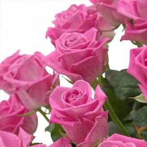 "Basket ""101 pink roses"""