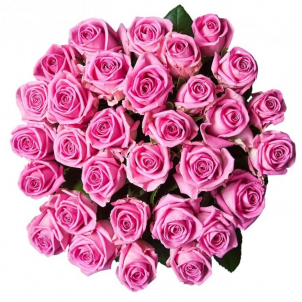 23 Pink roses