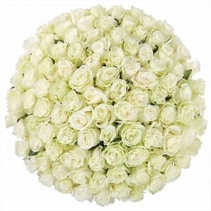 101 white rose in a box