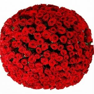 "Кошик ""251 червона троянда"""