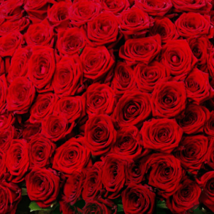 251 Red roses