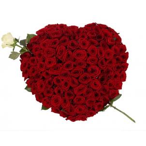 Сердце из 100 красных и 1 белой розы