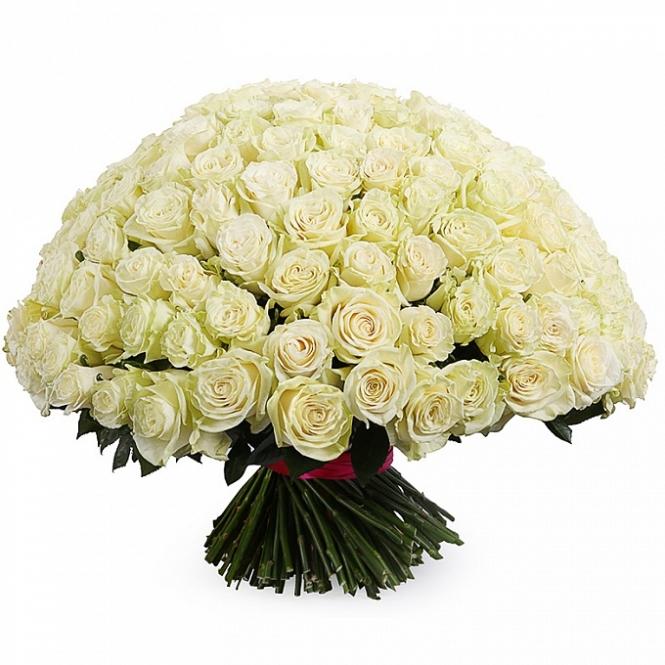 201 White rose