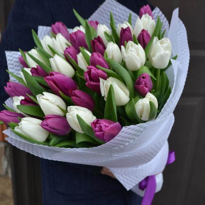 41 Фіолетово-білий тюльпан