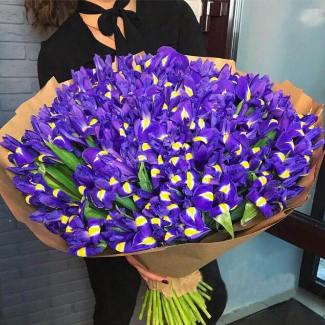 101 Iris