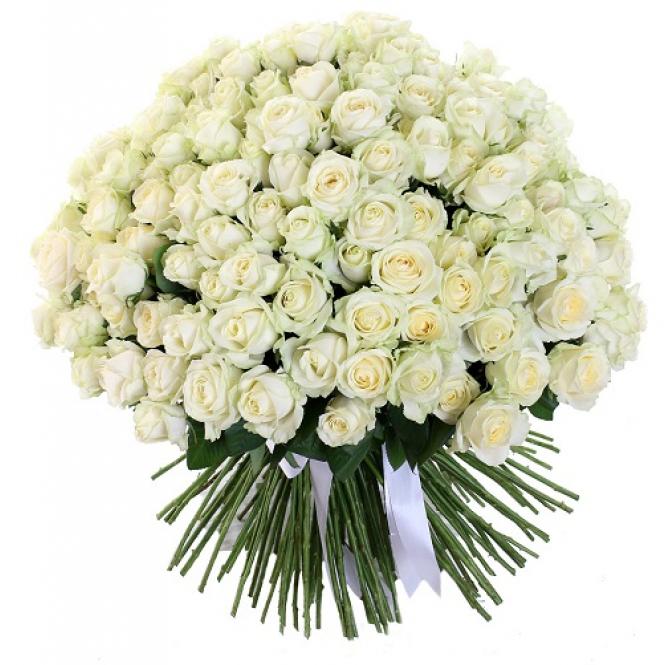 151 White rose
