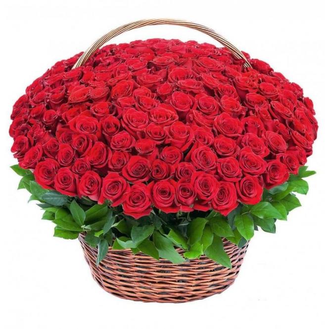 "Basket ""151 red roses"""