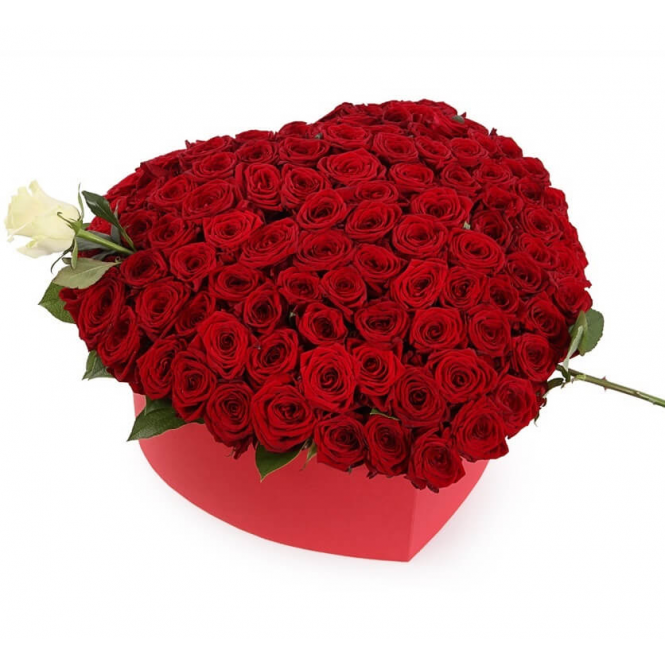 Heart of 100 red and 1 white rose