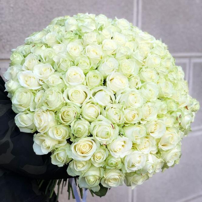 151 Біла троянда