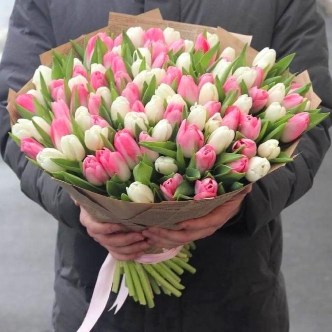 101 Бело-розовый тюльпан